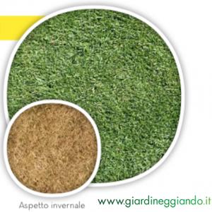 sementi-da-prato-maya-riviera-blend-di-gramigna-fito-conf-da-1-kg-e-5-kg-